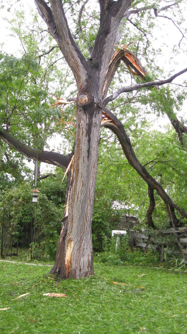Gallery Lightning Strikes Tree In Twin Falls Backyard