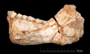 Oldest Homo sapiens fossils discovered in Morocco