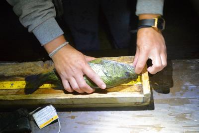 Bruneau electrofishing