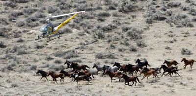 Officials examine ways to limit wild horse population growth