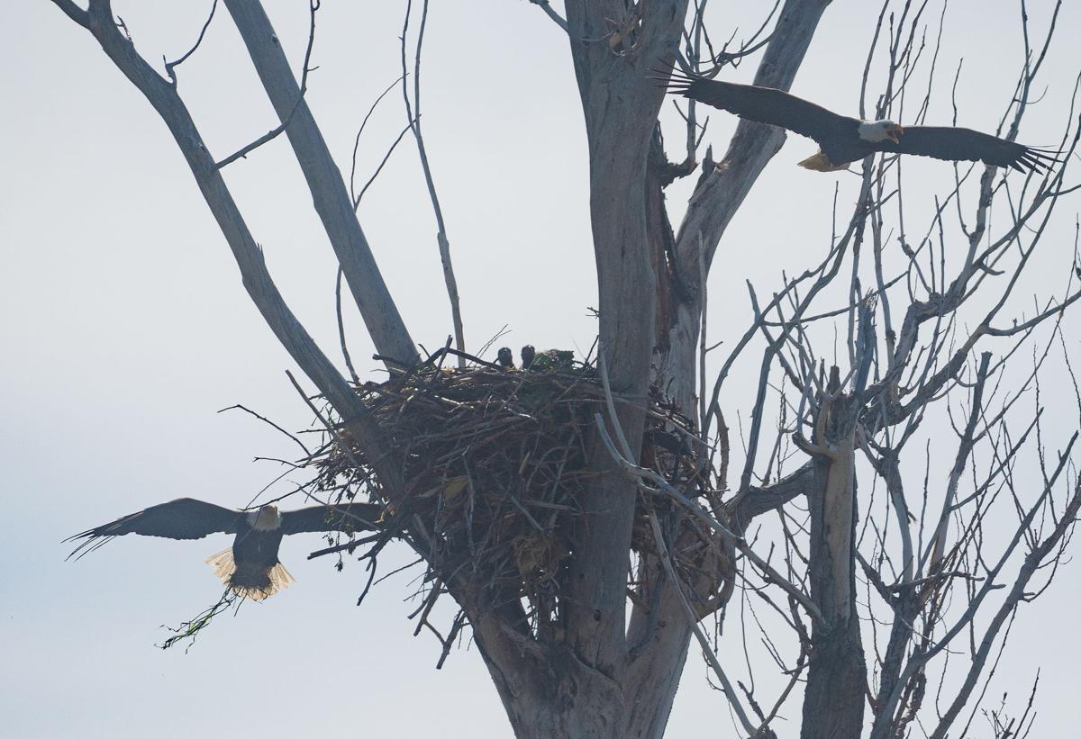 Eagles causing a stir