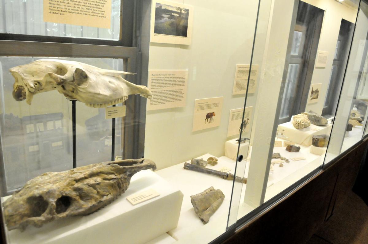 Cassia museum bones