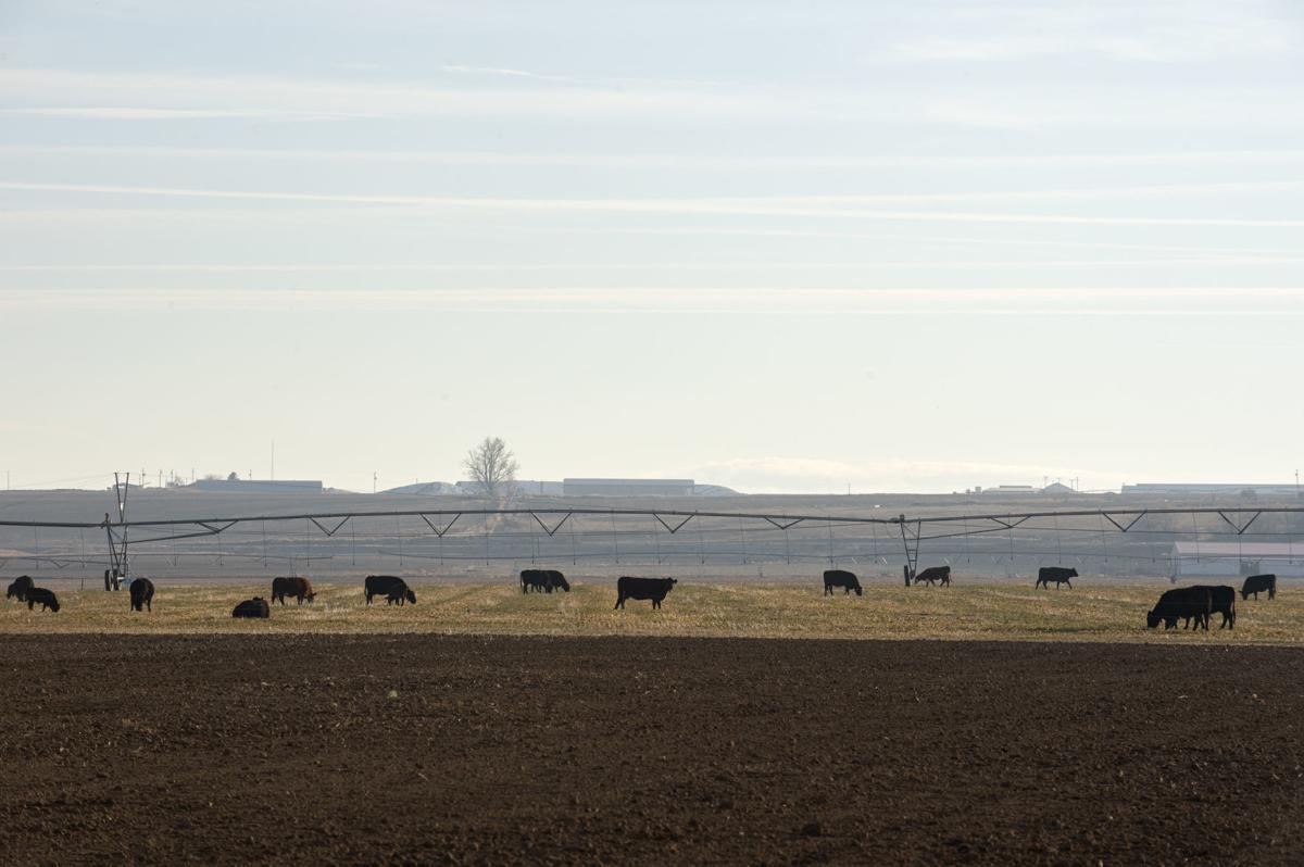 Wheat per acre