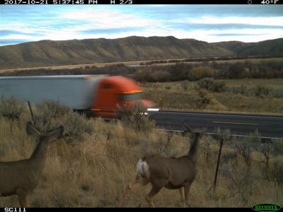 Trail cam deer