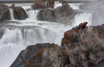 Shoshone Falls flow increases