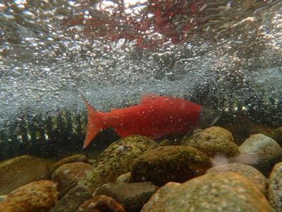Koenig: Gear Up for Kokanee Fishing | Outdoors and Recreation