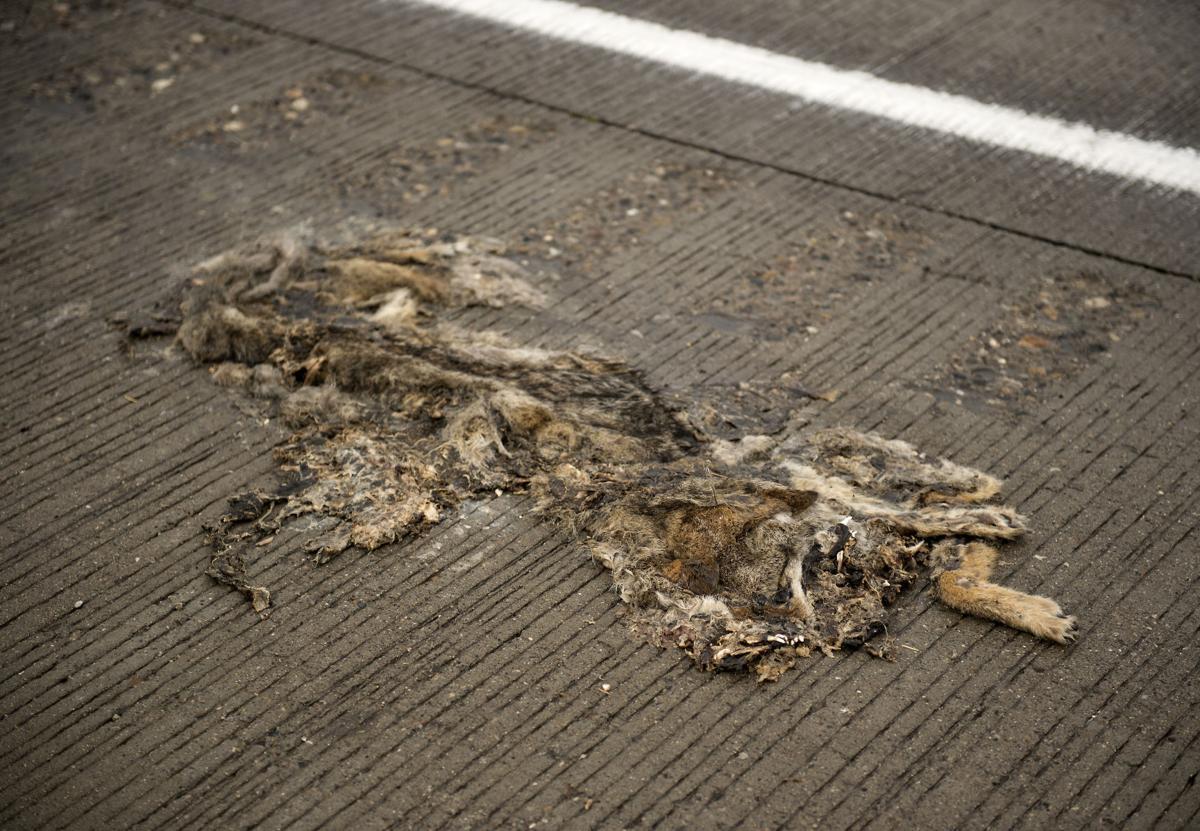 Roadkill image - blog