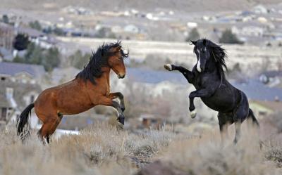 Wild Horses-Congress