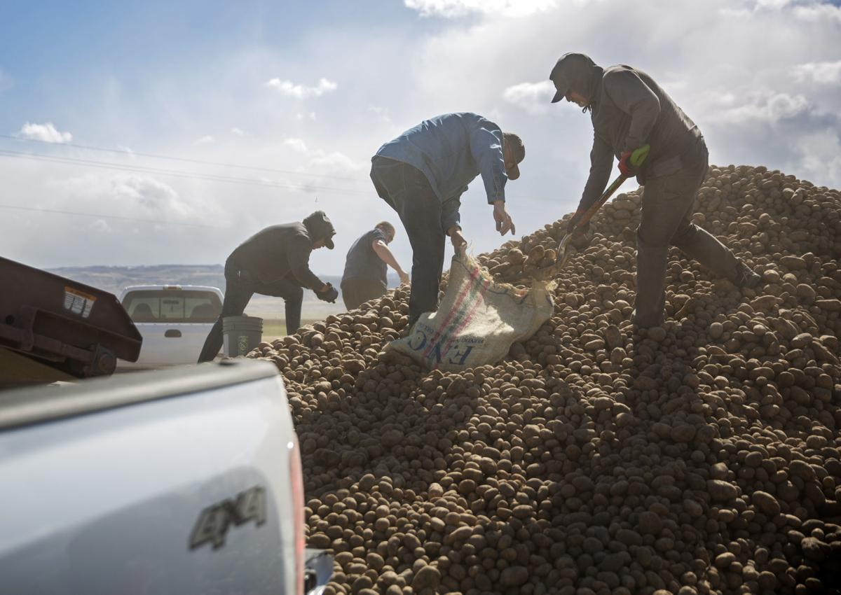 Potato farmers unable to sell all of their inventory