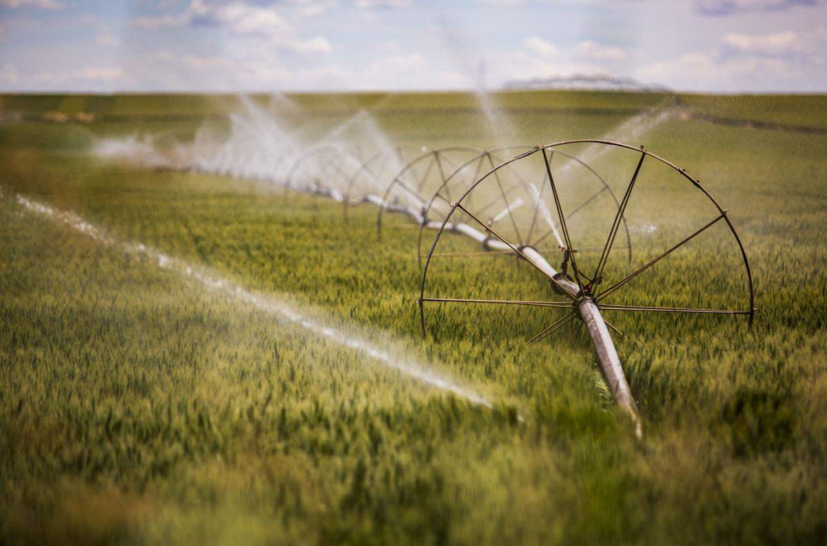 Groundwater user potential curtailment