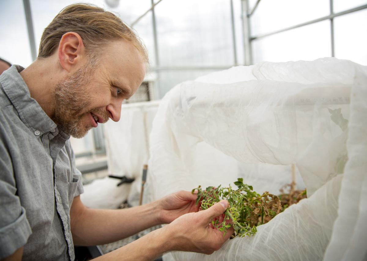 Potato pest research