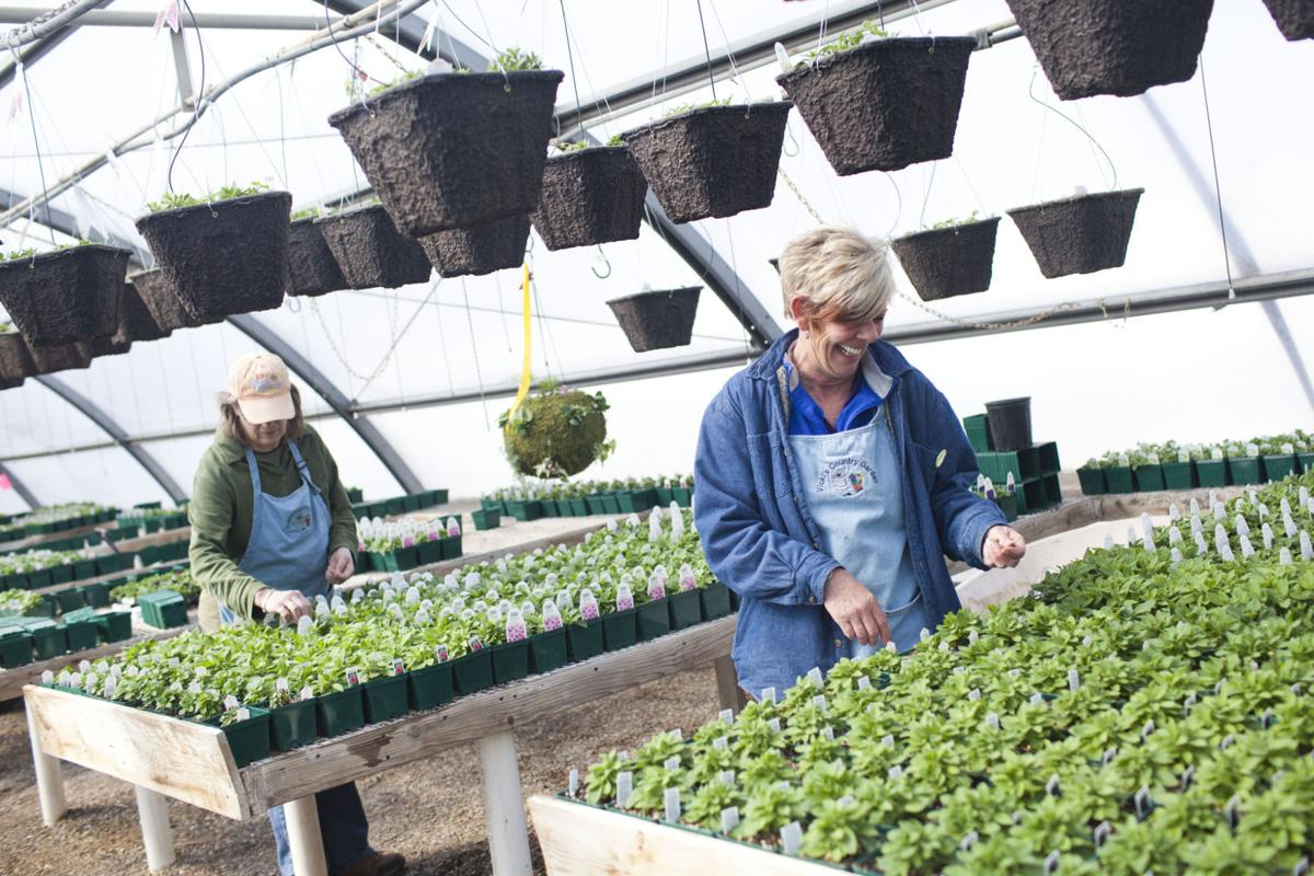 Best Nursery Vicki S Country Gardens Mini Cassia News