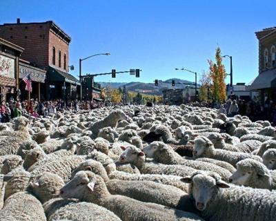 Trailing of the Sheep: 1,500 sheep parade highlights Ketchum