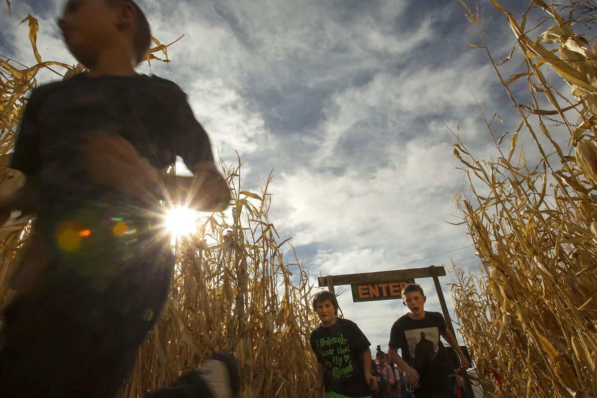 Magic Valley Corn Maze