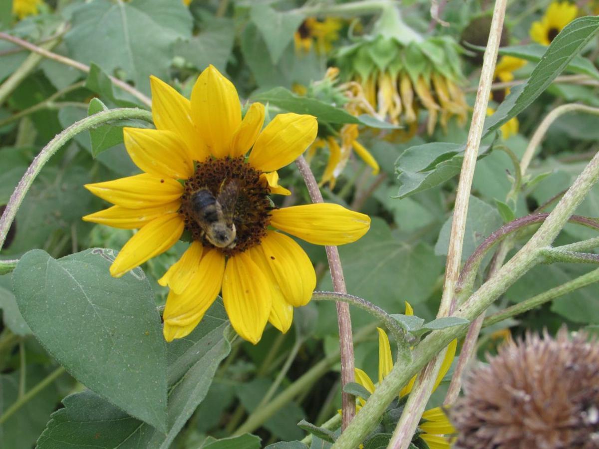 Tubbs bee walk