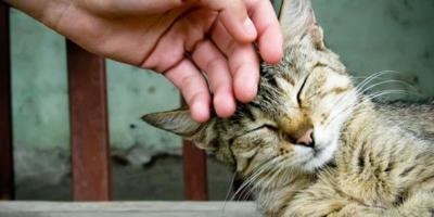 How To Pet A Cat So It Actually Likes You