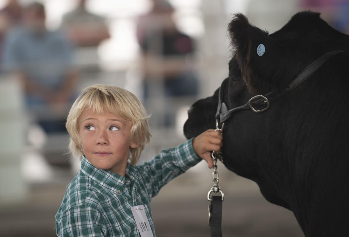 Livestock at the Cassia County Fair
