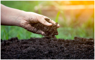 Get farm profits from healthy soil