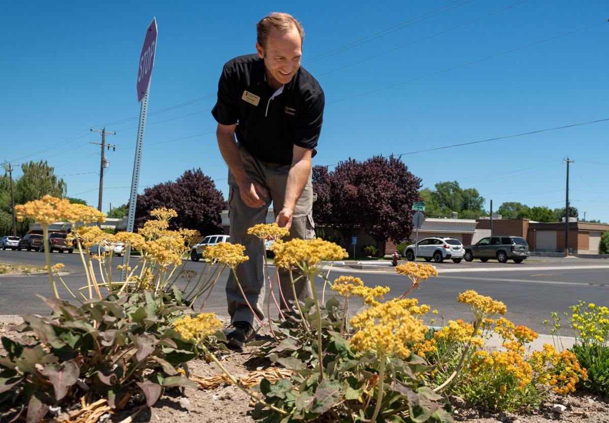 Pollinators and drought tolerant plants becoming popular