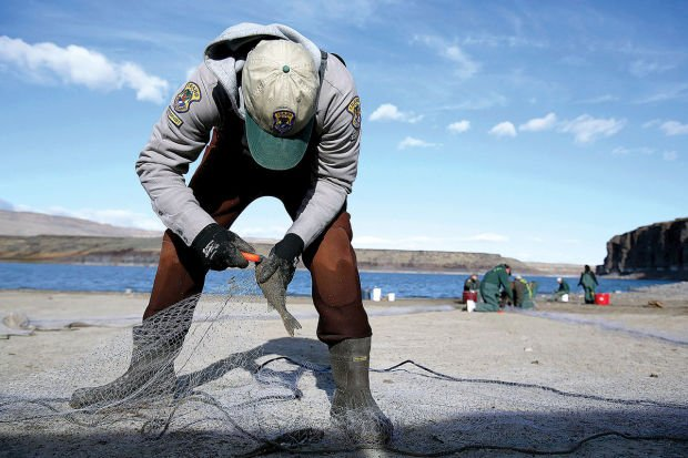 Gallery walleye research at salmon falls creek reservoir for Idaho department of fish and game