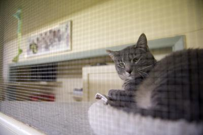 Idaho animal shelter says housing woes mean more pets surrendered