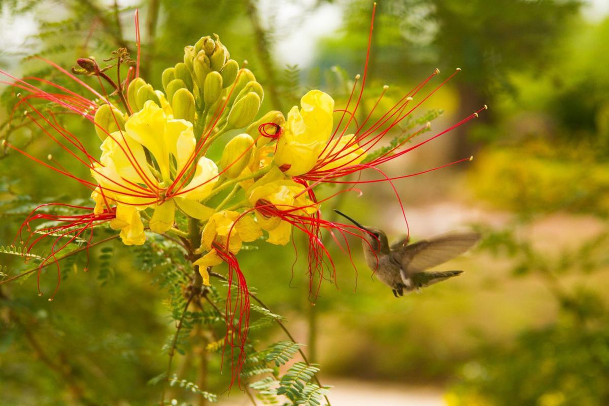 Garden Wise: The Enchanted Hummingbird