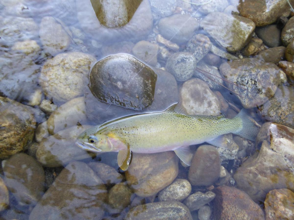 Phillips what big water year means for idaho fishing for Fish and game idaho