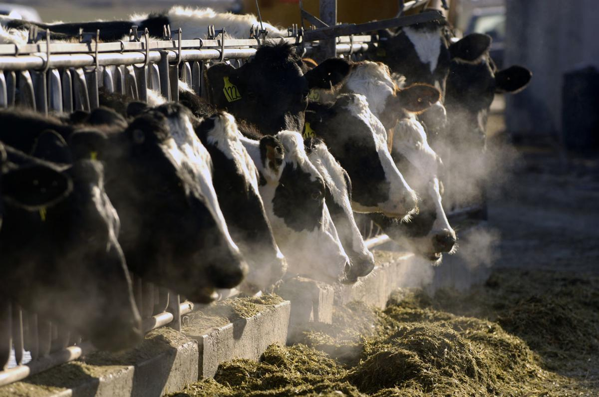 Dairy Spying Lawsuit