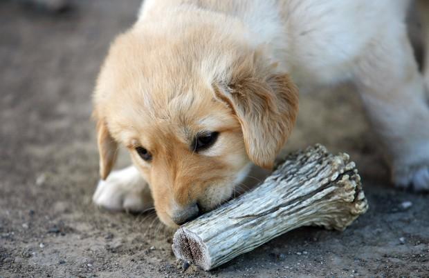 Doggie Delicious