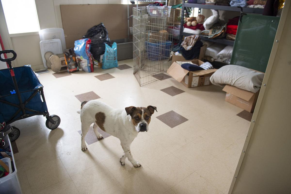 Minidoka Joint Powers Animal Control & Shelter in need