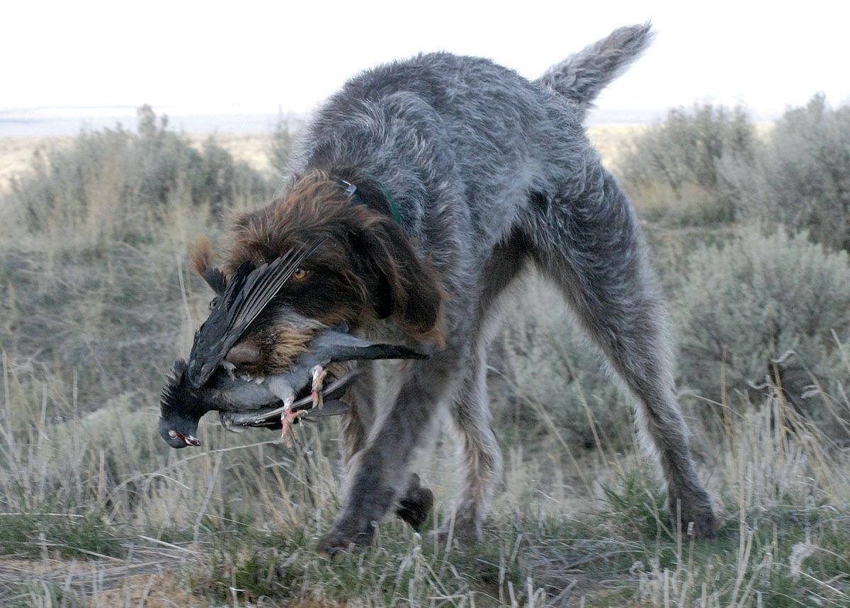 Best Dog Training Boise Meridian