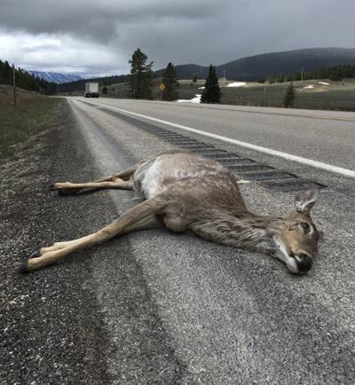 Dead deer