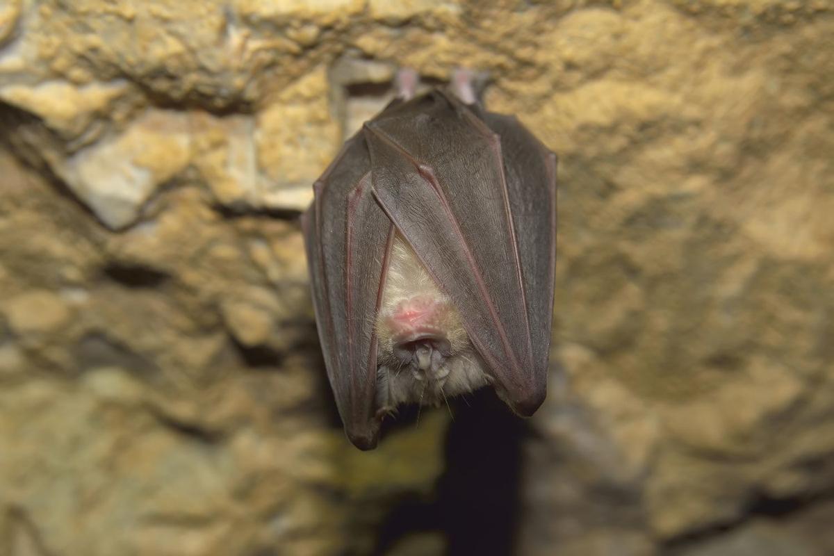 bat home
