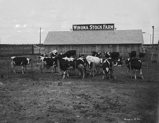 Winona stock farm