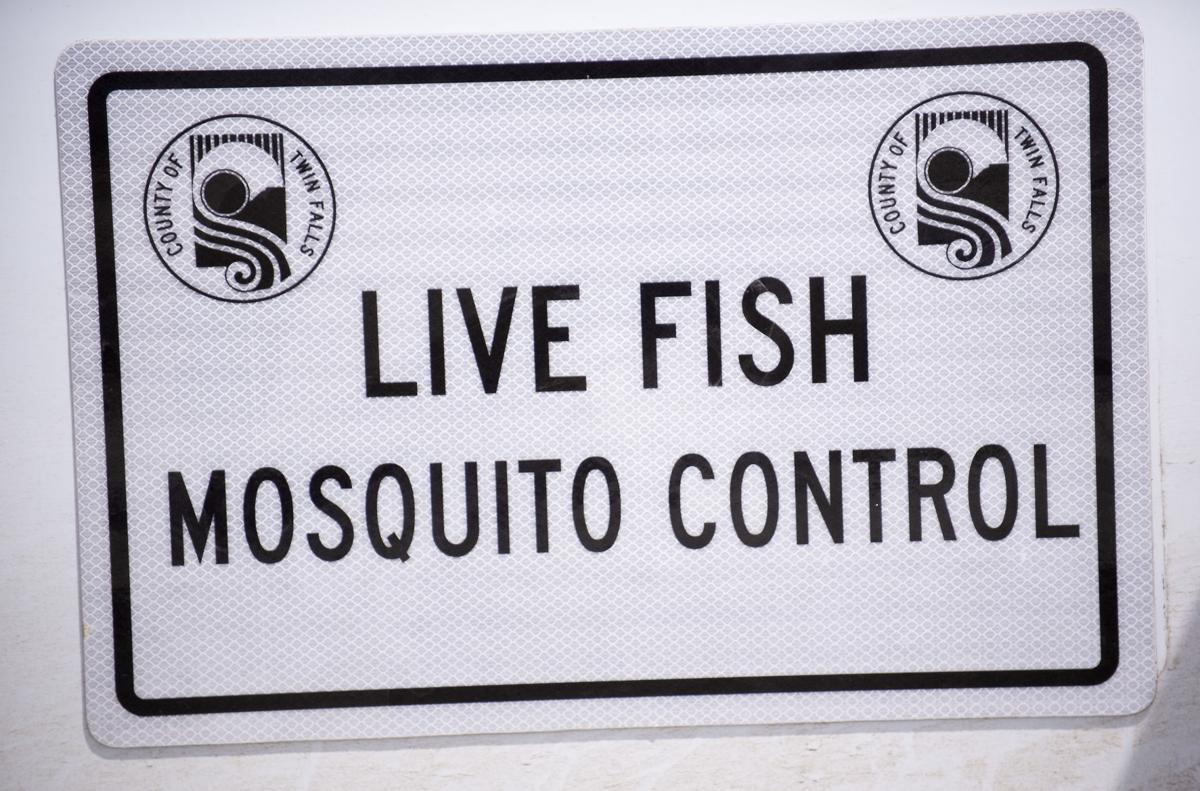 Mosquito abatement using fish