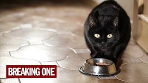 The secret history of the domestic cat