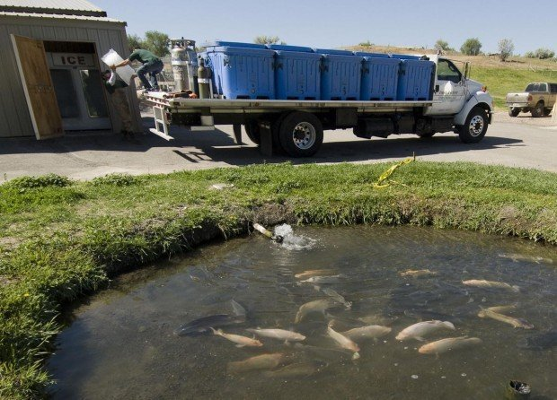 Buhl fish farm sells live seafood directly to local for Fish farm 3
