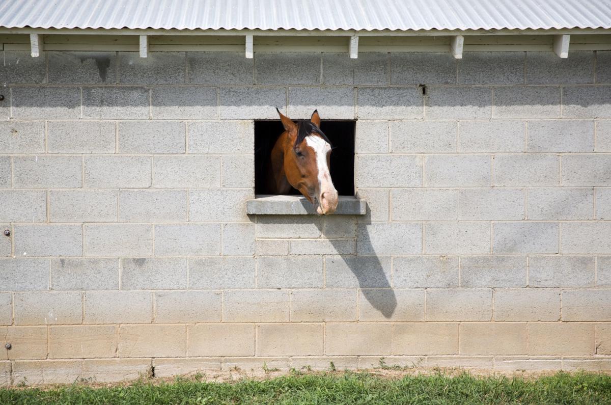 Equine herpes virus