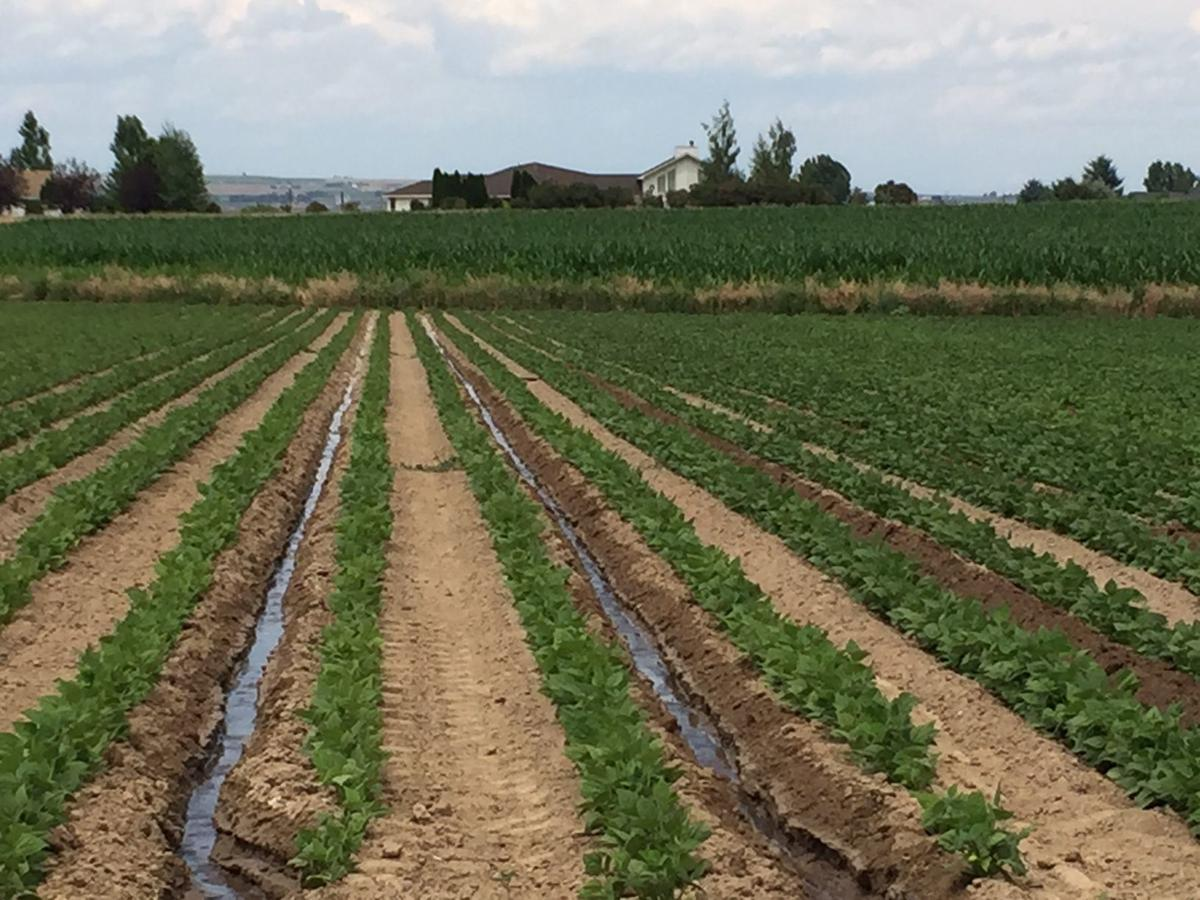 Low-tech irrigation