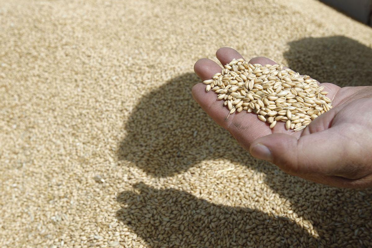 Wheat in Bin Storage