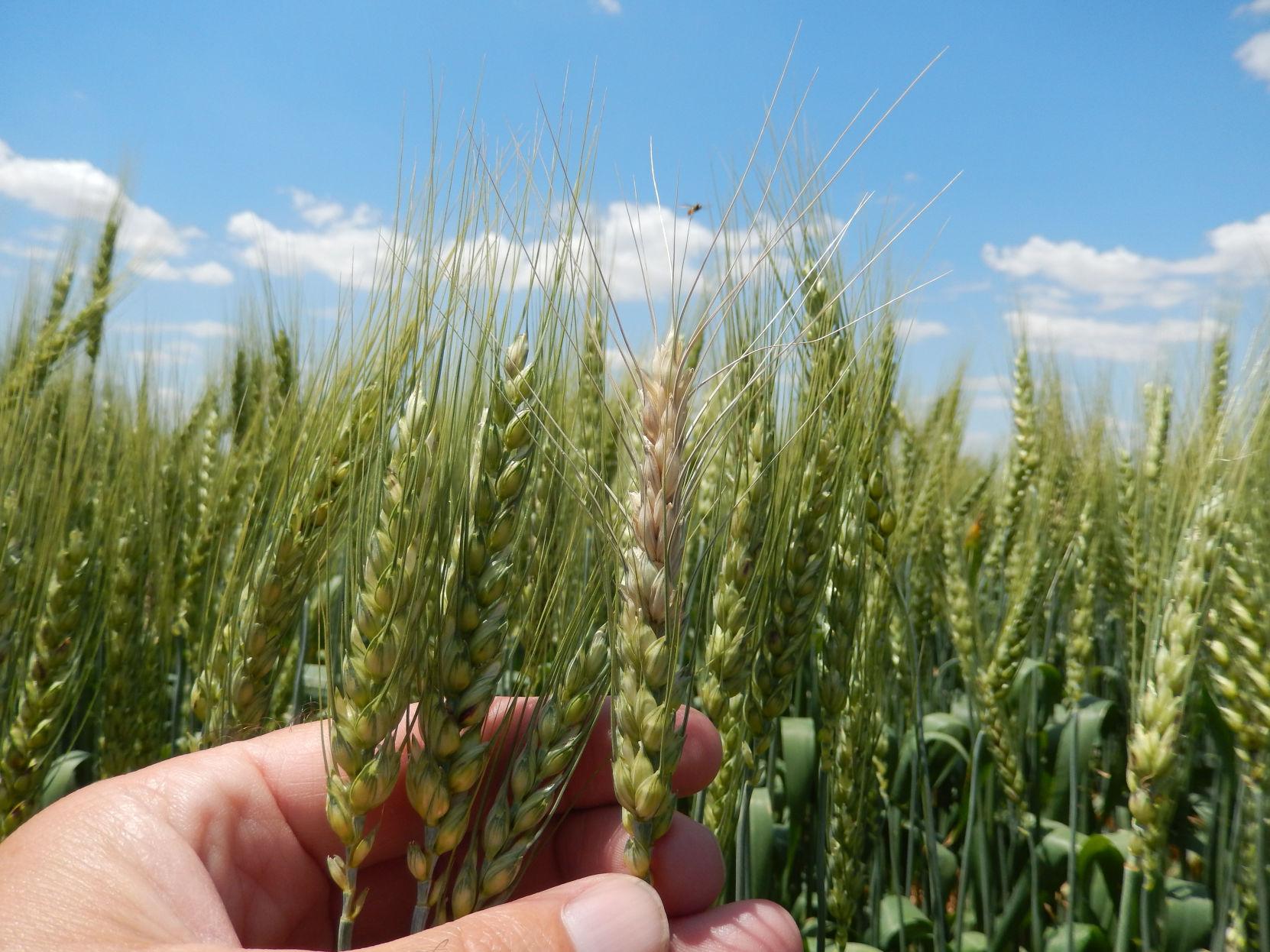 Dating show australia 2019 wheat