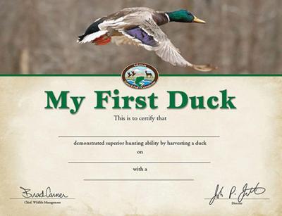 First duck