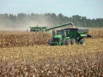 Corn production