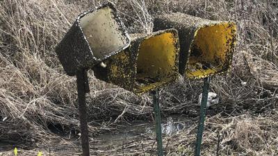 Buffalo gants