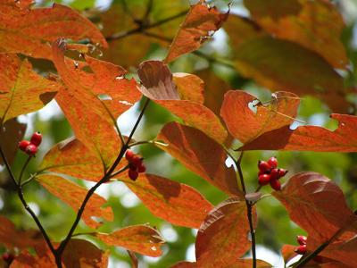 Arkansas Fall Foliage Will Be Late To Turn Local Entertainment