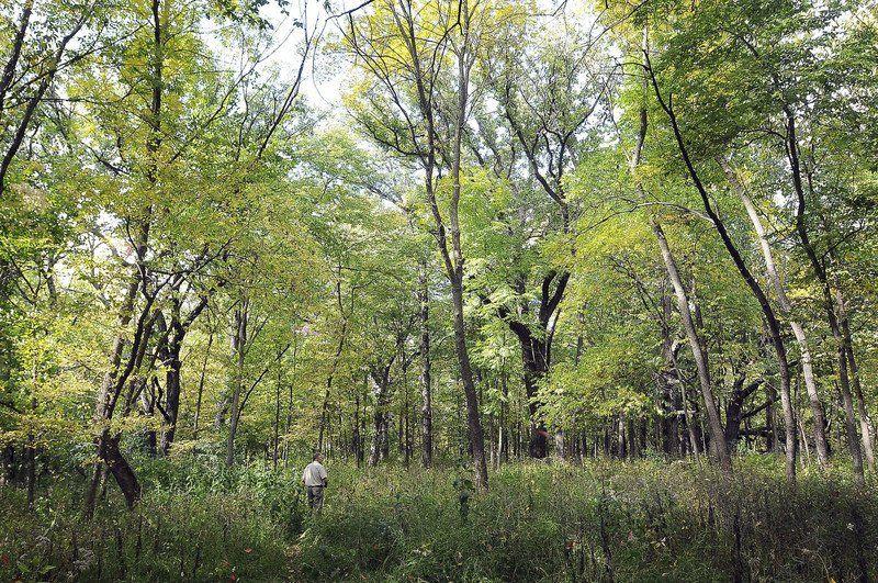 Williams nature center