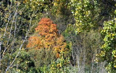 Fall color progress 2