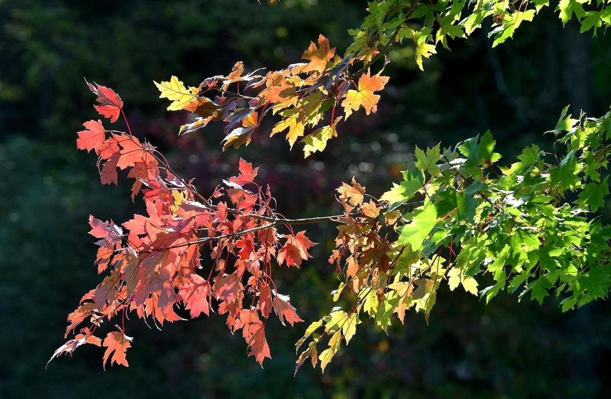 Fall color progress 3