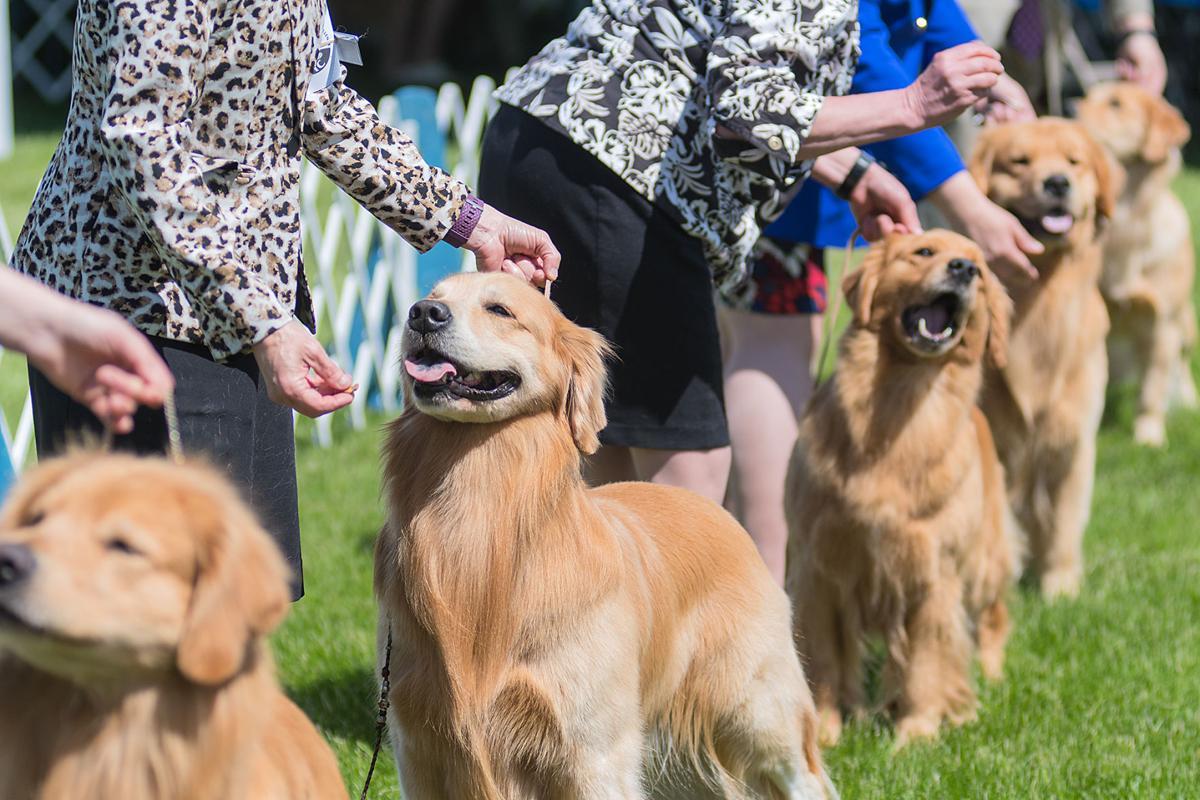 Dog Show 5