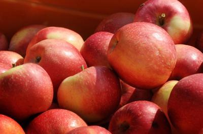 Montgomery Orchard